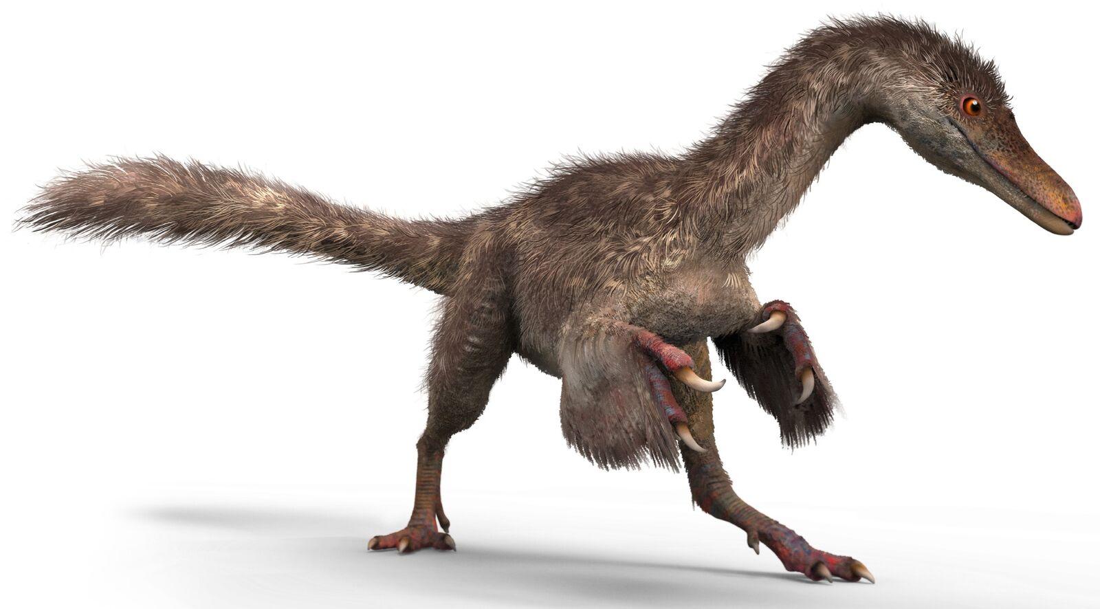 A small coelurosaur dinosaur
